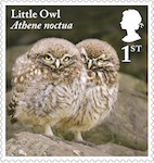 Tawny Owl chicks on stamp.